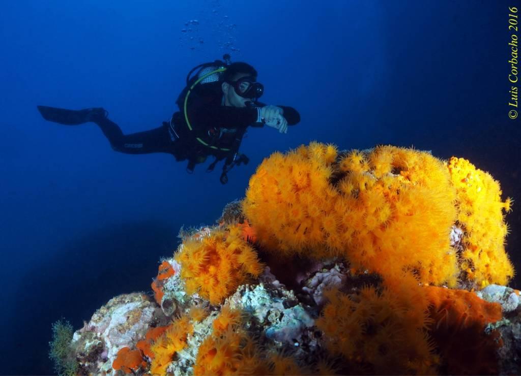buzo y coral todo el mundo puede bucear