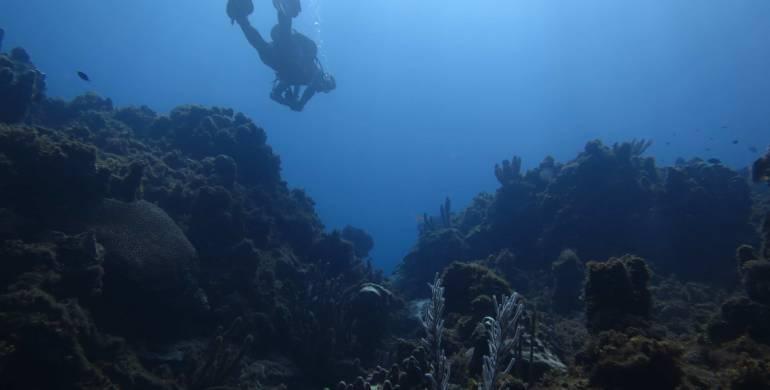 Cuidar nuestros océanos